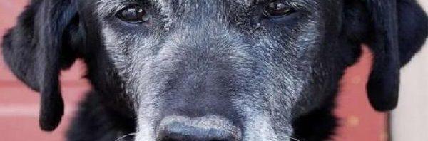 Baffi d'argento, un hospice per cani anziani