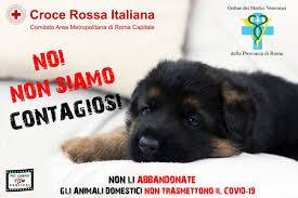 Risultato immagini per cani abbandonati