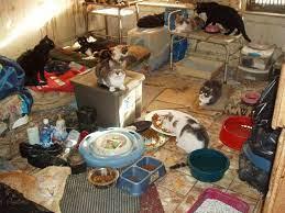 Non aprite quella porta: il fenomeno dell'accumulo di animali - Animal Law  Italia