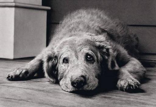 Il cane ponte….