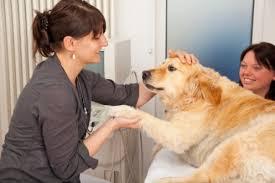 Sopprimere il cane malato o lasciarlo morire lentamente? | Tutto Zampe
