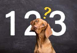 I cani sanno contare? - Petformance